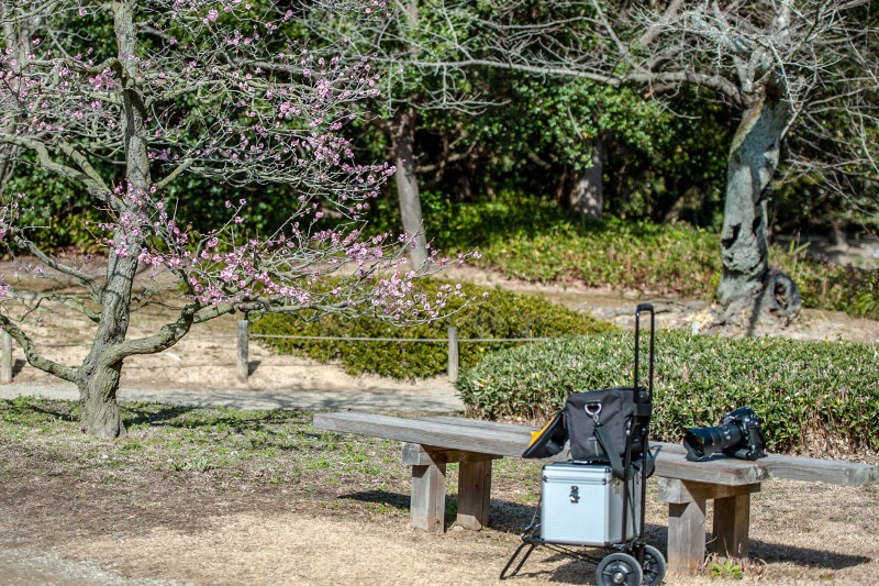 公園散歩 高松市 栗林公園_d0246136_18335944.jpg