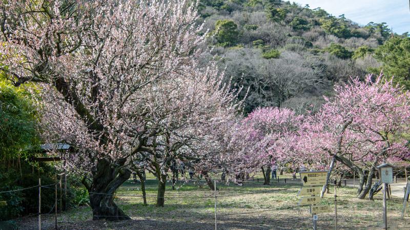 公園散歩 高松市 栗林公園_d0246136_18342347.jpg