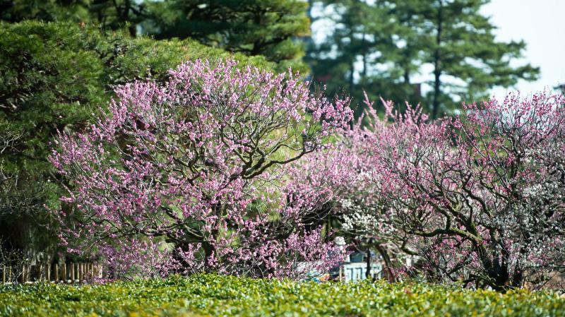 公園散歩 高松市 栗林公園_d0246136_18351396.jpg
