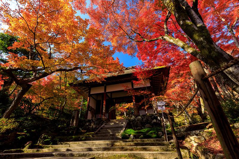 京の紅葉2018 艶秋・常寂光寺 - 花景色-K.W.C. PhotoBlog