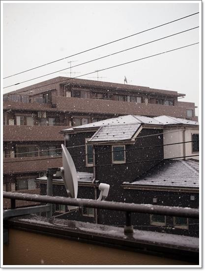 大雪じゃない!&ソフィーの月命日_d0013149_23143450.jpg