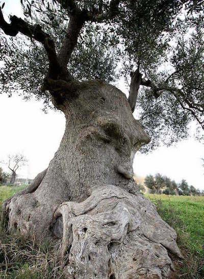 Thinking Tree/考える木とレイン・ツリーとポモドーロとアポーとラパタータと約束の地とエデンの午後_c0109850_23243359.jpeg