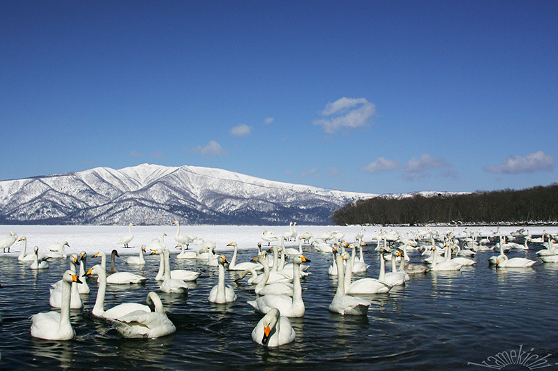 史上最強の寒波襲来・・・だってよ(北海道旅の思い出)Ⅱ _a0057752_21265726.jpg