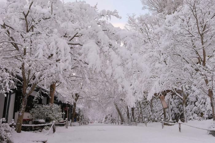 京都 大原雪景色 2019_f0021869_00251659.jpg