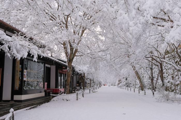 京都 大原雪景色 2019_f0021869_00251711.jpg