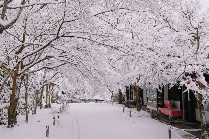 京都 大原雪景色 2019_f0021869_00251762.jpg