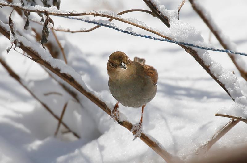 また関東圏に雪が…_f0368272_19230071.jpeg