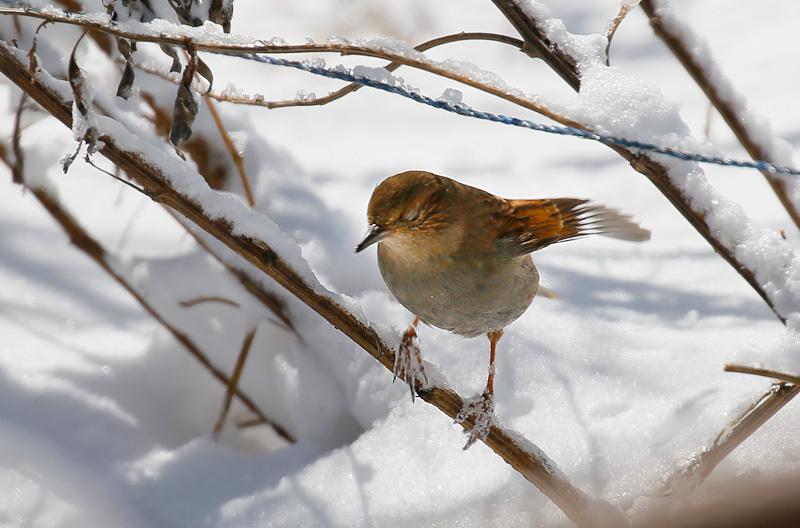 また関東圏に雪が…_f0368272_19232193.jpeg
