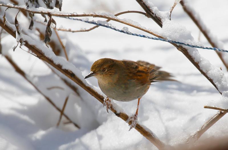 また関東圏に雪が…_f0368272_19233253.jpeg