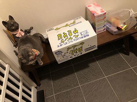 2階のアル&お雛さま&黒猫選手(動画)&とにちゃんち&迷子_d0071596_00264714.jpg