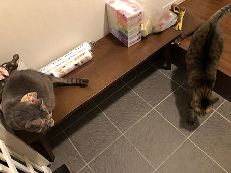 2階のアル&お雛さま&黒猫選手(動画)&とにちゃんち&迷子_d0071596_00270101.jpg