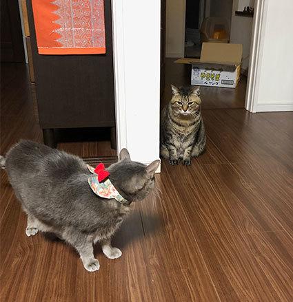 2階のアル&お雛さま&黒猫選手(動画)&とにちゃんち&迷子_d0071596_00284690.jpg
