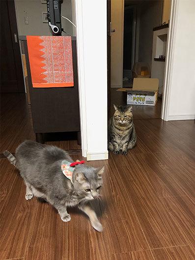 2階のアル&お雛さま&黒猫選手(動画)&とにちゃんち&迷子_d0071596_00285517.jpg
