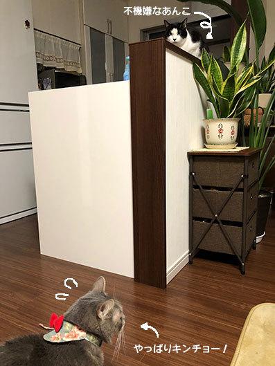 2階のアル&お雛さま&黒猫選手(動画)&とにちゃんち&迷子_d0071596_00292800.jpg