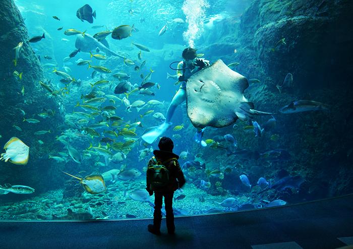 新江ノ島水族館はバレンタイン セクシーなハコフグちゃん _b0145398_22193627.jpg