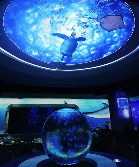 新江ノ島水族館はバレンタイン セクシーなハコフグちゃん _b0145398_22220126.jpg