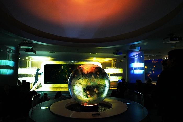 新江ノ島水族館はバレンタイン セクシーなハコフグちゃん _b0145398_22221965.jpg