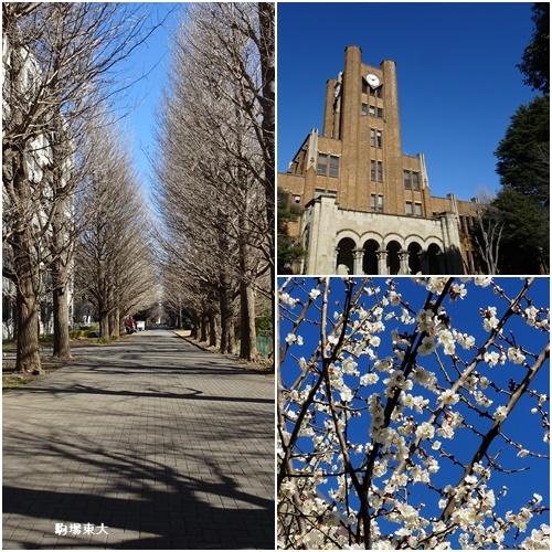 東京ジャーミイ (トルコ文化センター)へ_c0051105_16361556.jpg