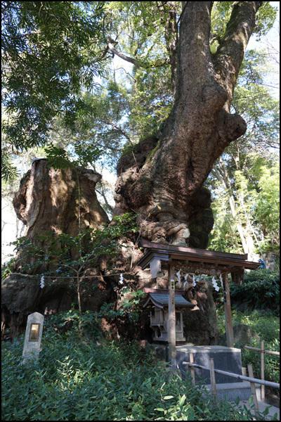 来宮(きのみや)神社 :熱海_b0019313_16043282.jpg