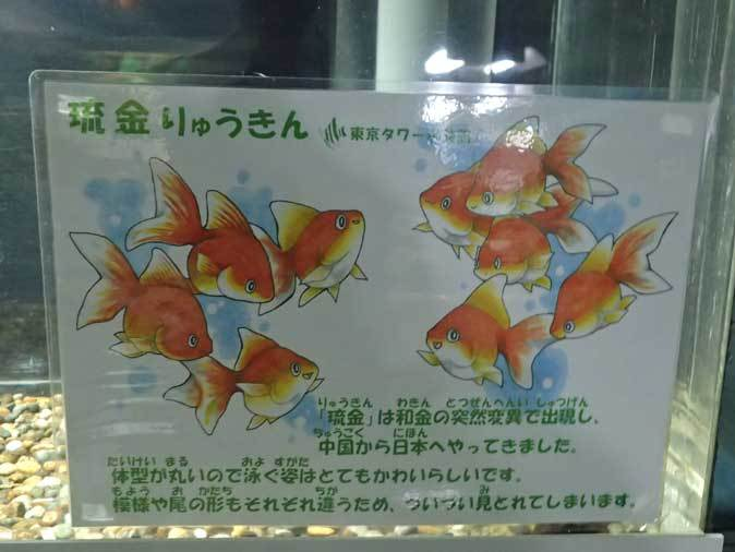 東京タワー水族館~日本庭園_b0355317_19521302.jpg