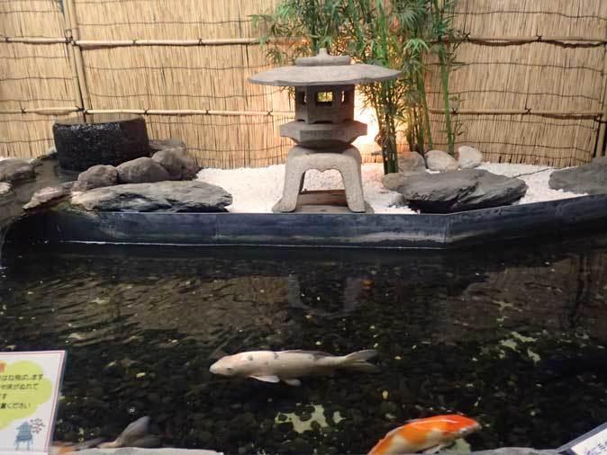 東京タワー水族館~日本庭園_b0355317_19541280.jpg