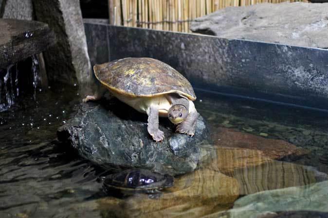 東京タワー水族館~日本庭園_b0355317_19550962.jpg