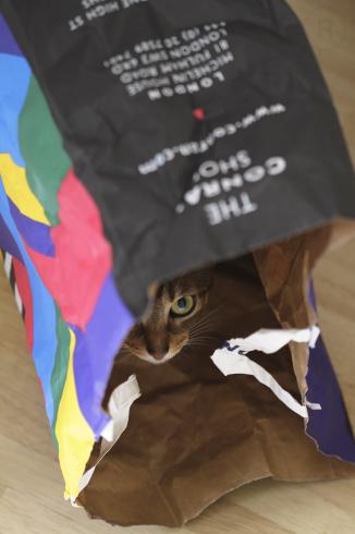 [猫的]コンラン_e0090124_23573303.jpg
