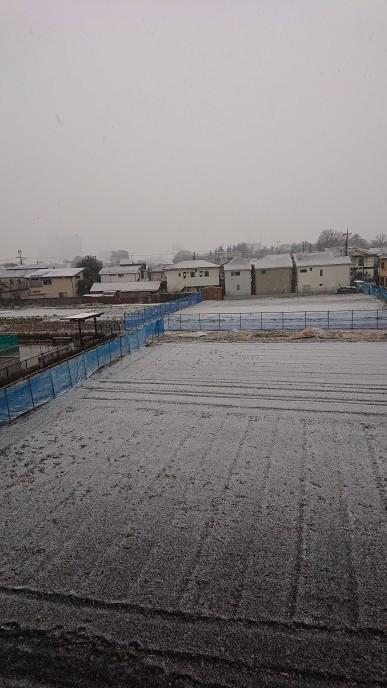 雪が積もらなくて良かった_d0155439_22514874.jpg