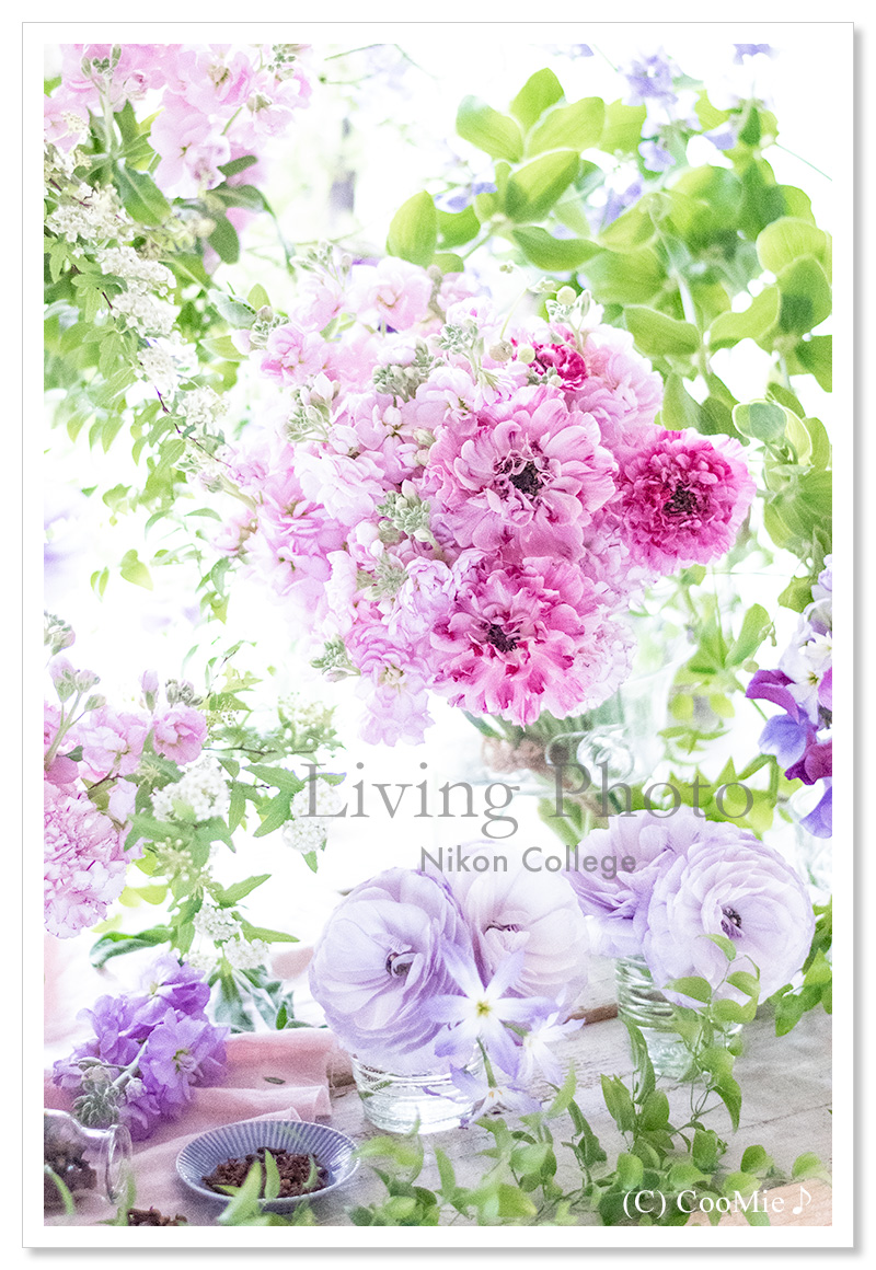 LIVING PHOTO「Claire」 ♪_a0097840_1958289.jpg