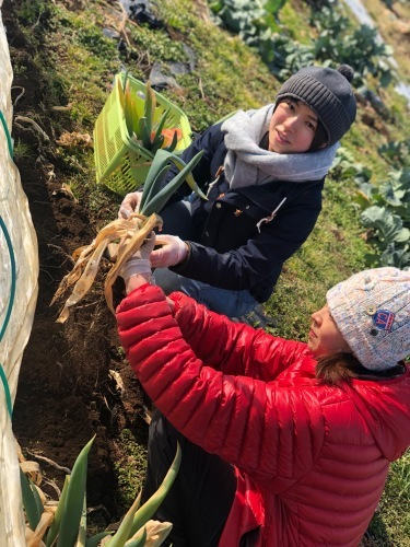 今朝は5年ぶりに畑に参加される東海林さんと岬さん飯田で畑仕事_c0222448_13113928.jpg