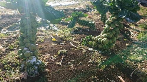 今朝は5年ぶりに畑に参加される東海林さんと岬さん飯田で畑仕事_c0222448_13141113.jpg