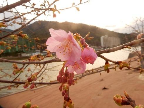 寒さの中で花開く_e0175370_20032073.jpg
