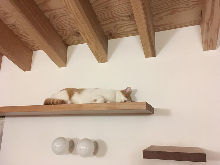 ネコの様子・その1_b0061387_07061846.jpg