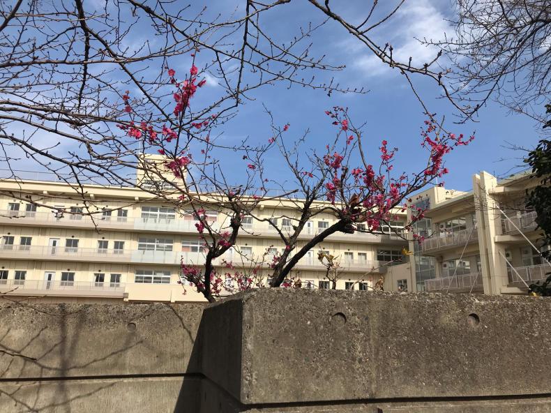 どこかに春が_f0378589_21253009.jpg