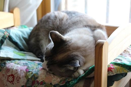 ネコはベッドで丸くなる_a0333195_17385565.jpg