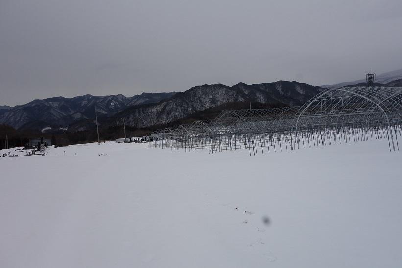 雪景色_e0112417_23121329.jpg