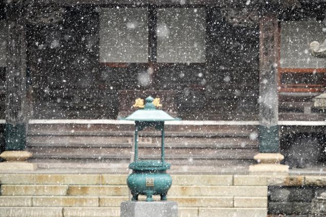雪積もらず_c0104227_13035954.jpg