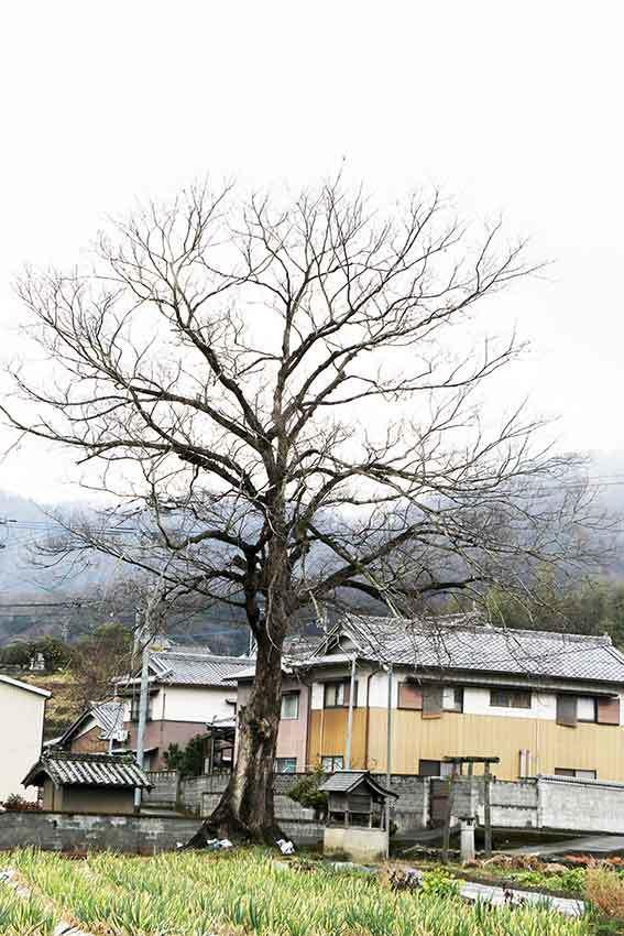2019年2月11日「平成の大嘗祭における麁服の調進」♪_d0058941_20341920.jpg