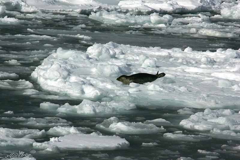 史上最強の寒波襲来・・・だってよ(北海道旅の思い出)Ⅲ_a0057752_14425521.jpg