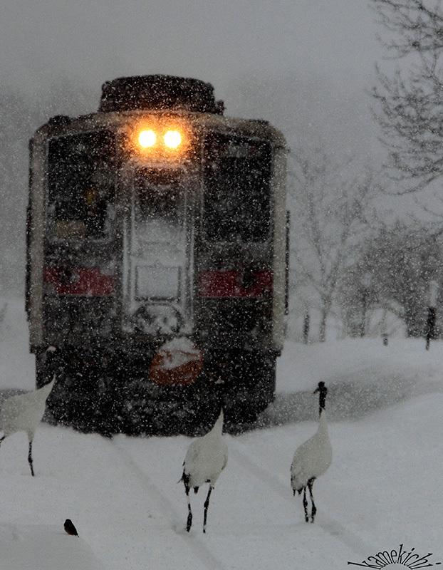 史上最強の寒波襲来・・・だってよ(北海道旅の思い出)Ⅲ_a0057752_14431503.jpg