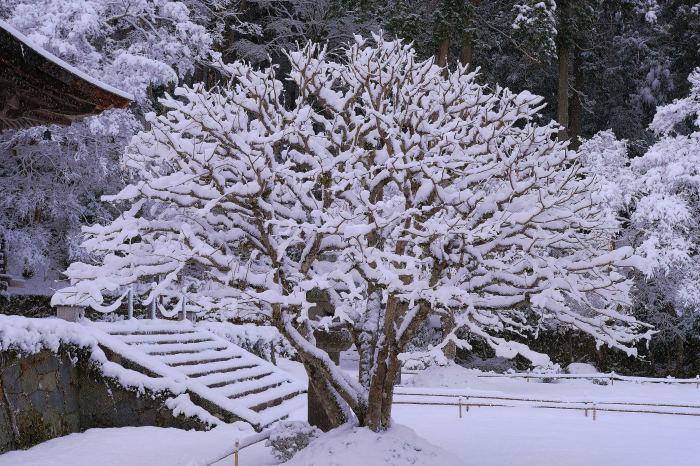 京都 大原雪景色 2019_f0021869_00023171.jpg