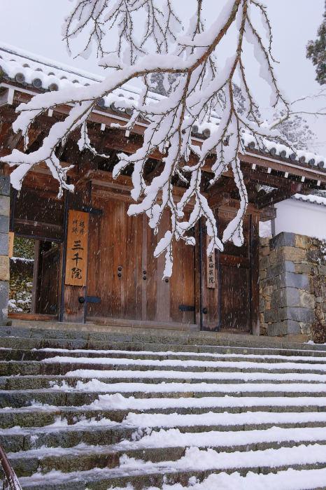 京都 大原雪景色 2019_f0021869_00023221.jpg