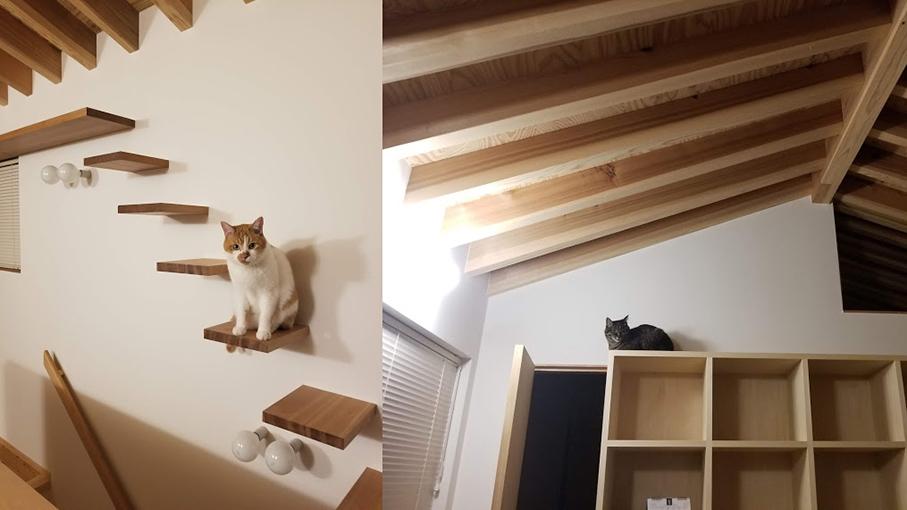 ネコの様子・その2_b0061387_20064244.jpg