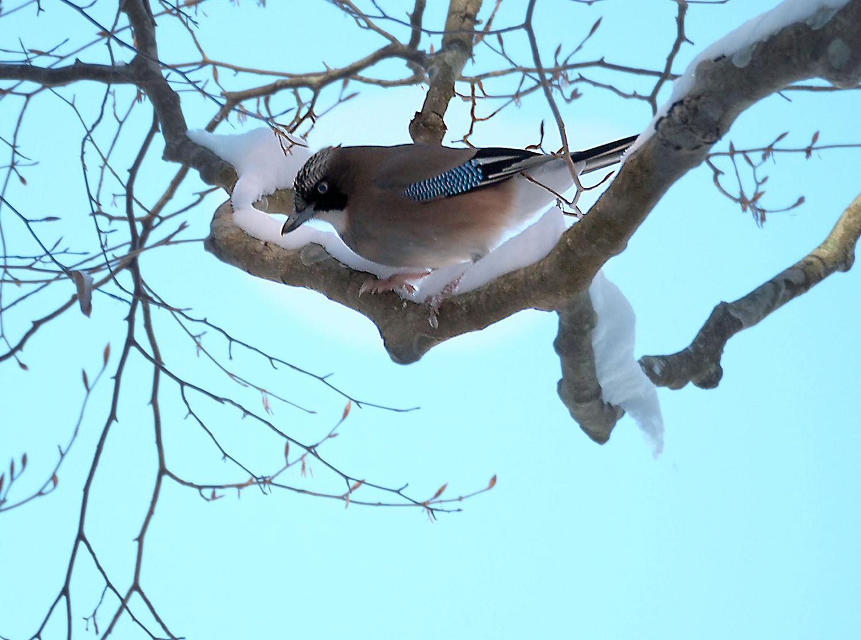 金剛山の野鳥_e0254493_12101184.jpg