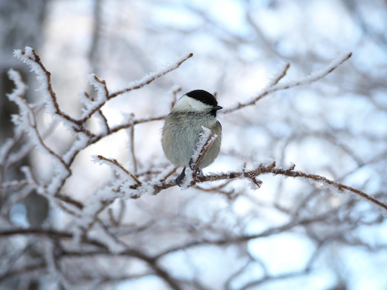 金剛山の野鳥_e0254493_1255974.jpg