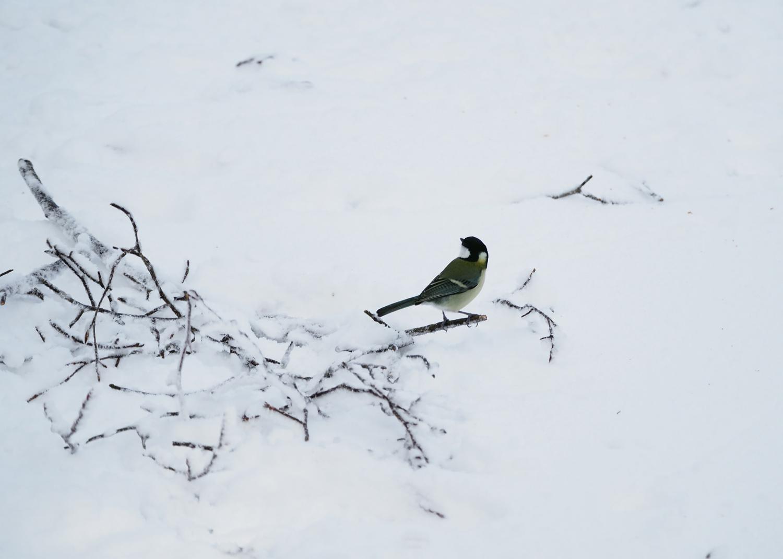 金剛山の野鳥_e0254493_1262530.jpg