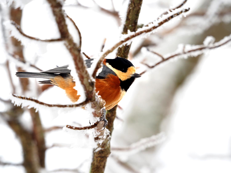 金剛山の野鳥_e0254493_128338.jpg