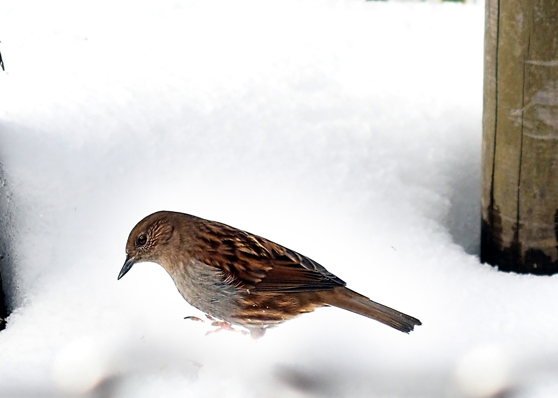 金剛山の野鳥_e0254493_1293350.jpg