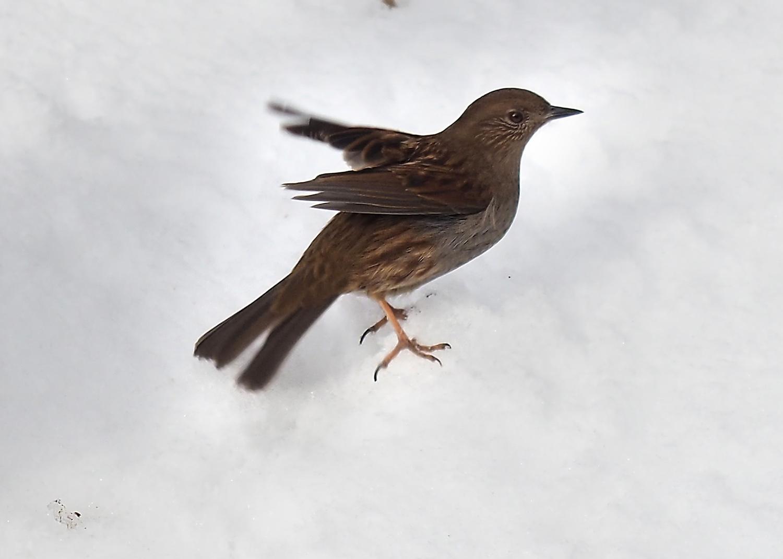 金剛山の野鳥_e0254493_129924.jpg