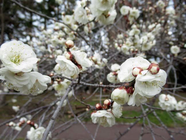 植物園 早春の草花展_e0048413_20471481.jpg